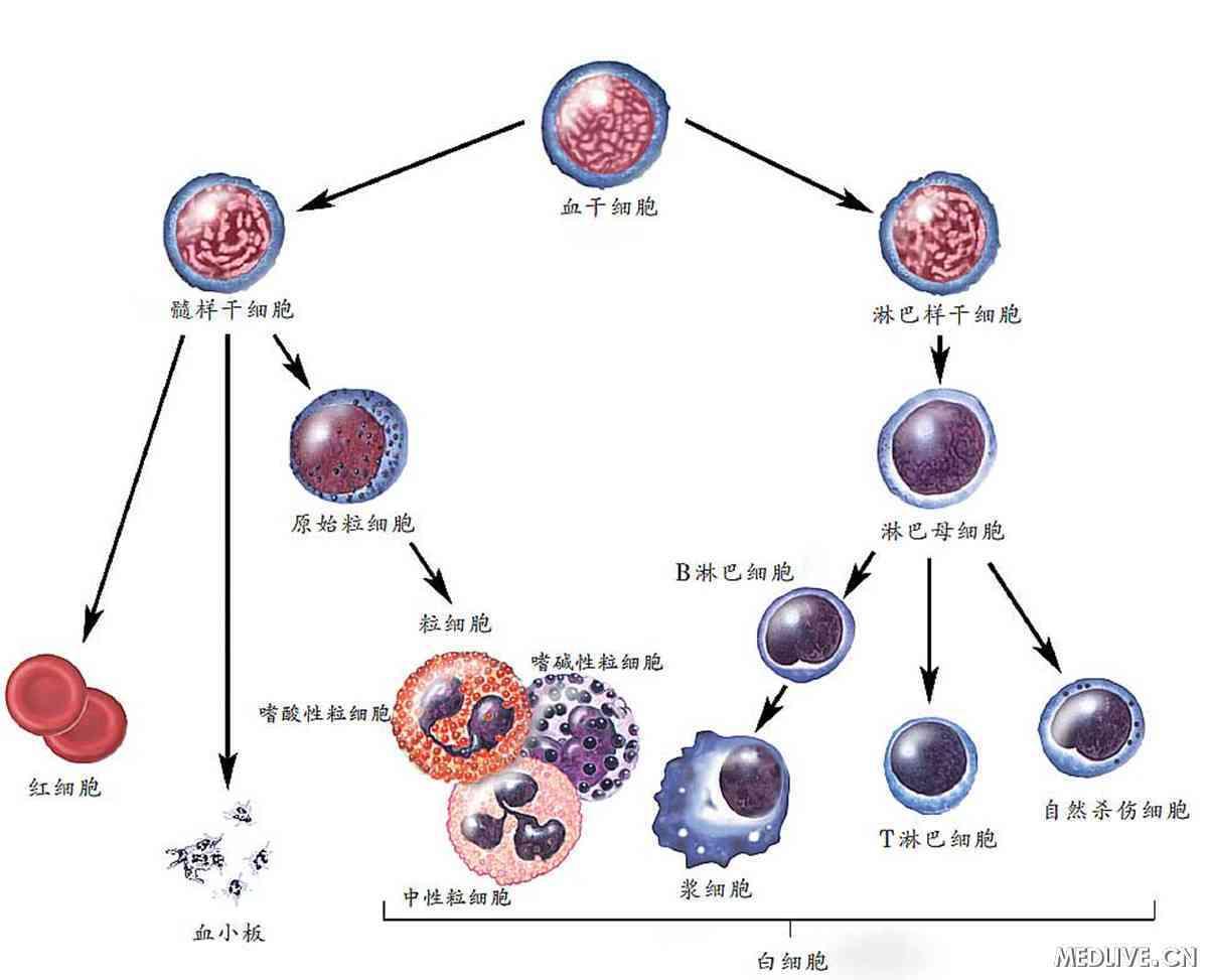 细胞提蛋白步骤